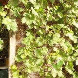Wilgenmat 150 klimplanten